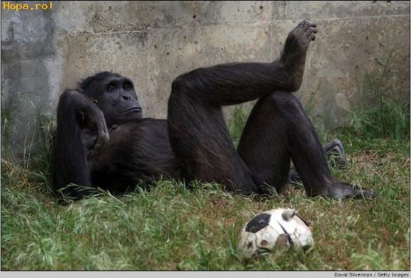 Animale - S-a terminat Euro 2008