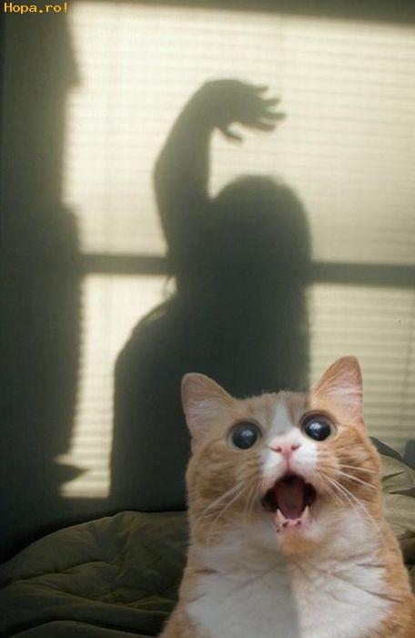 Animale - Aaaa.... nu da