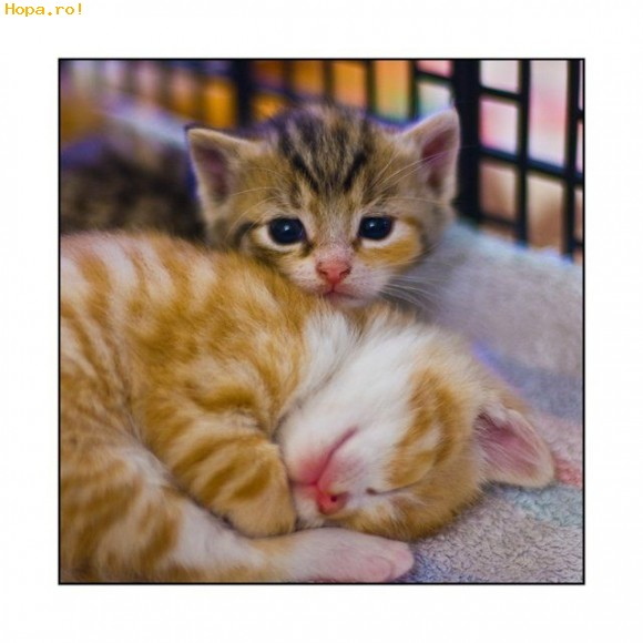 Animale - Doua pisicute scumpe
