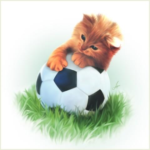 Animale - Pisica fotbalista