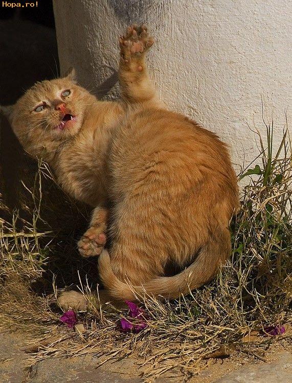 Animale - Mitzi este speriata