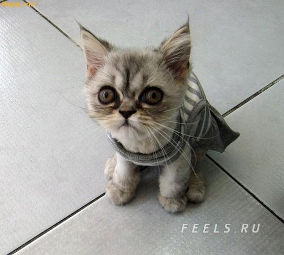 Animale - O pisicuta dragalasa