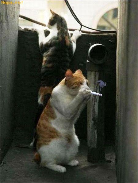 Animale - Stai linistit.....nu vine nimeni