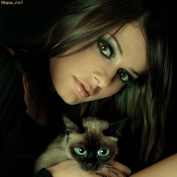 Animale - Doua pisici