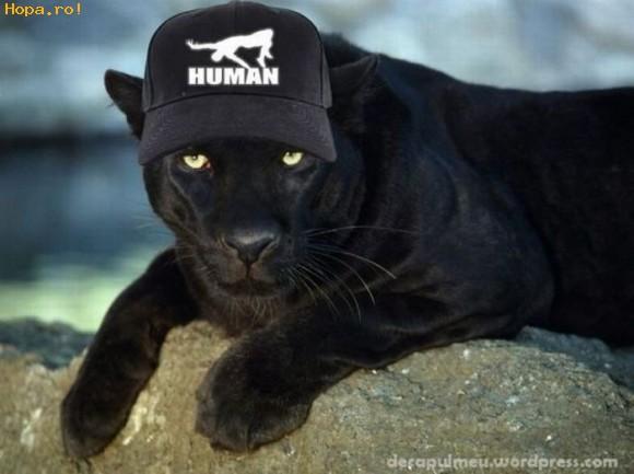 Animale - Human