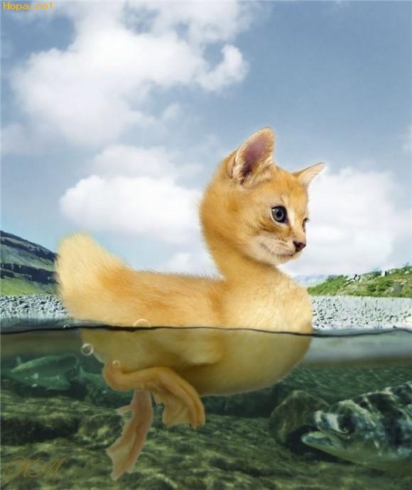Ciudate - Ratusca sau pisicuta