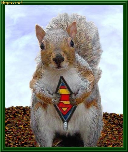 Animale - Super-veverita