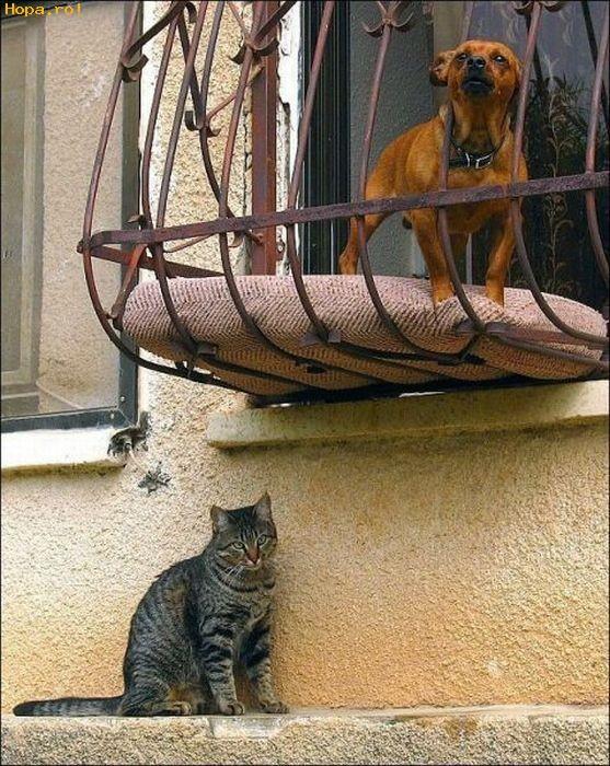Animale - Unde o fi matza aia?