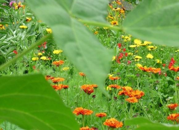 Flori - Camp de flori
