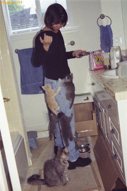 Animale - Pisicute de casa