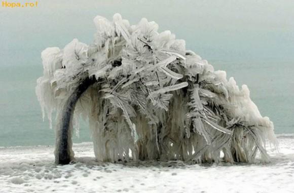 Diverse - Copac inghetat