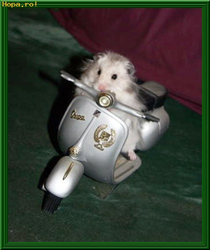 Animale - Micul motociclist