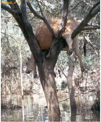 Animale - M-am agatat in copac