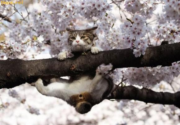 Animale - Distractie prin pomi