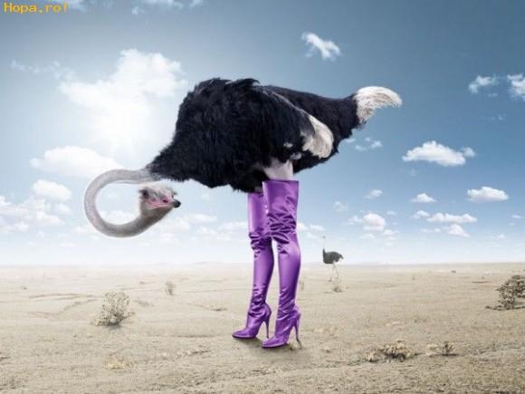 Animale - Vai ...ce picioare frumoase am!!!