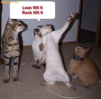 Animale - pisici trasnite!!