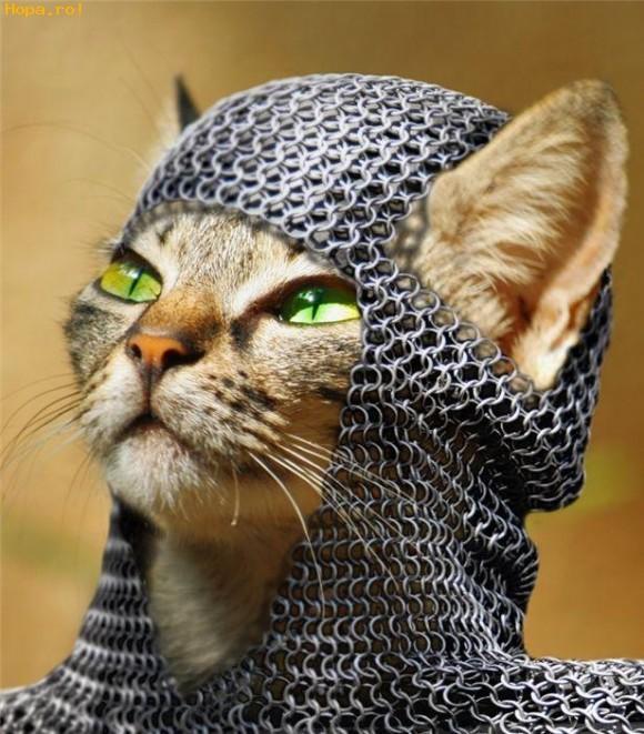 Animale - Pisica razboinica