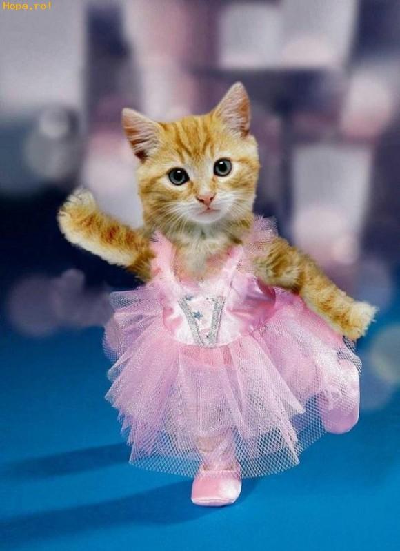 Animale - Sunt o mica balerina