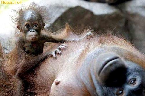 Animale - Mami uite ne pozeaza!