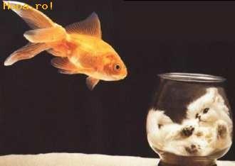 Animale - Visul oricarui pestisor auriu