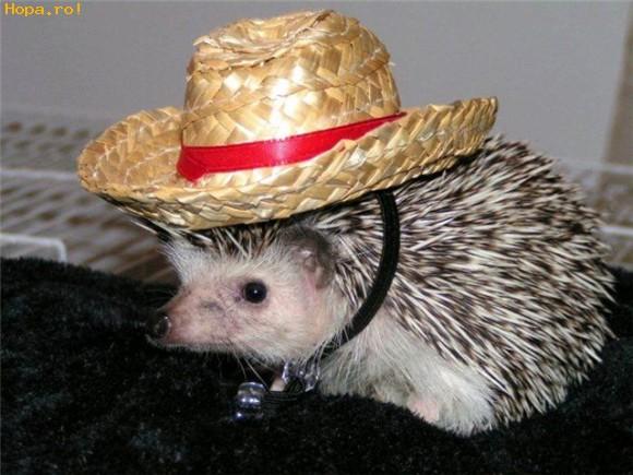 Animale - O Suzana sunt cowboy vestit