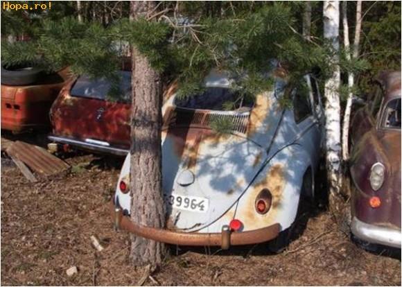 Auto Moto - Copac crescut pe sub bara de protectie