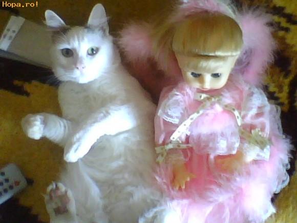 Animale - Un ingeras de pisicut!