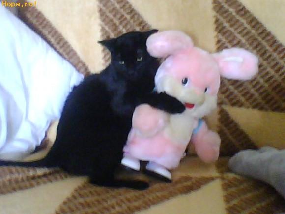 Animale - Prietenie poate exista si intre o pisica si o jucarie....