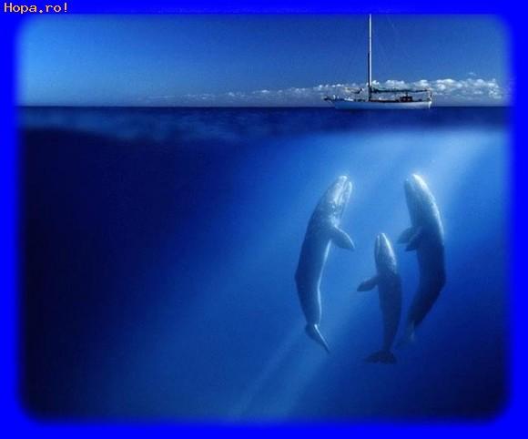 Animale - Balene la Polul Nord