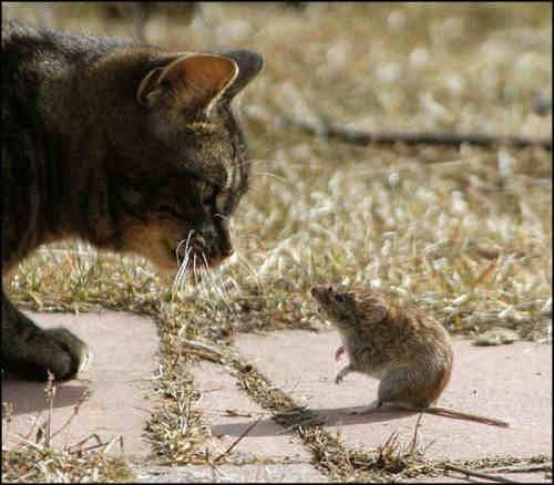 Animale - Adversari