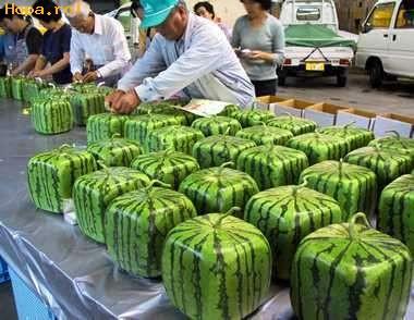 Ciudate - Numai la japonezi vezi asa ceva!