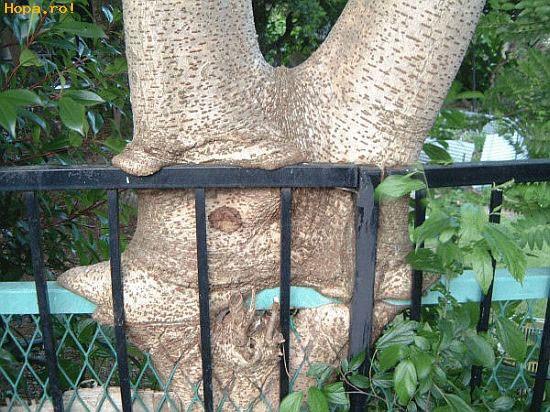 Diverse - Copac ciudat