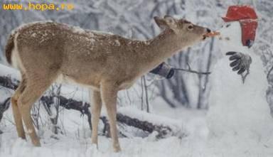 Animale - Povestea caprioarei si a omului de zapada