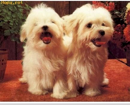 Animale - Doi catelusi dragutzi