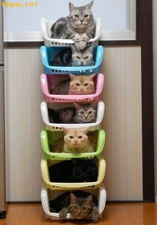 Animale - Fiecare avem cate o culoare preferata