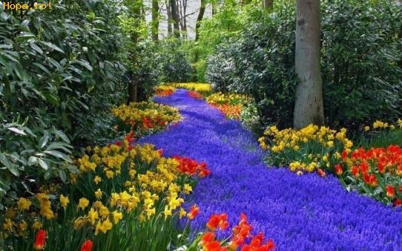 Flori - Floricele, floricele