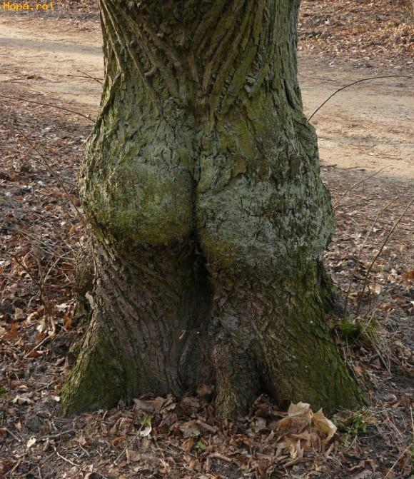 Diverse - Copac sexy