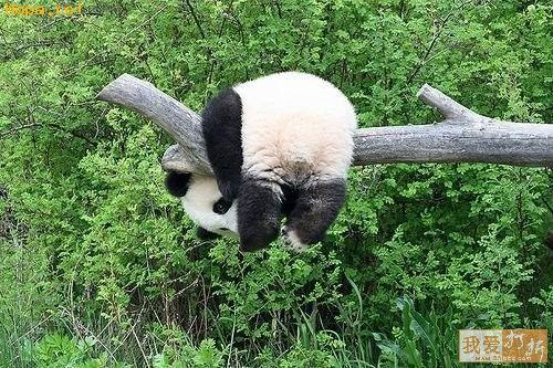 Animale - Ma cred la gimnastica