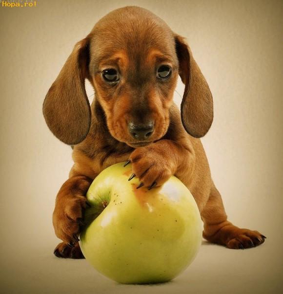 Animale - Imi plac merele
