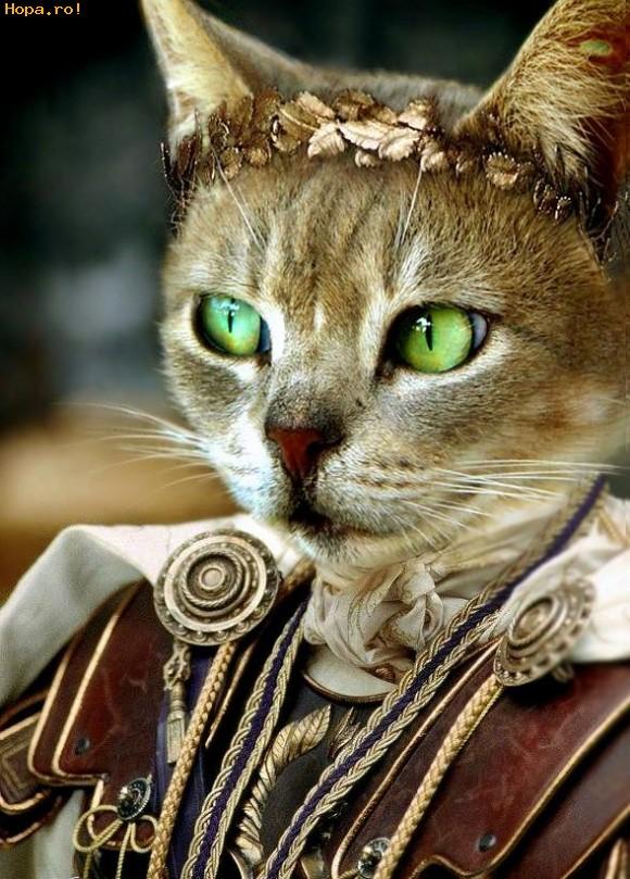 Animale - Imparatul Pisicilor