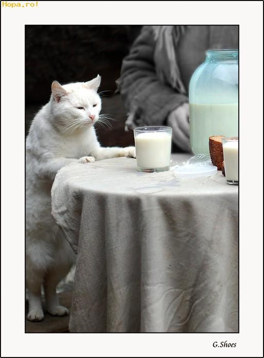 Animale - La un pahar cu lapte