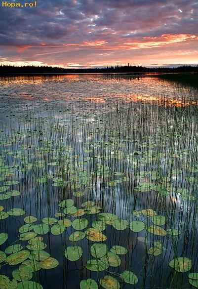 Peisaje - Lacul cu nuferi