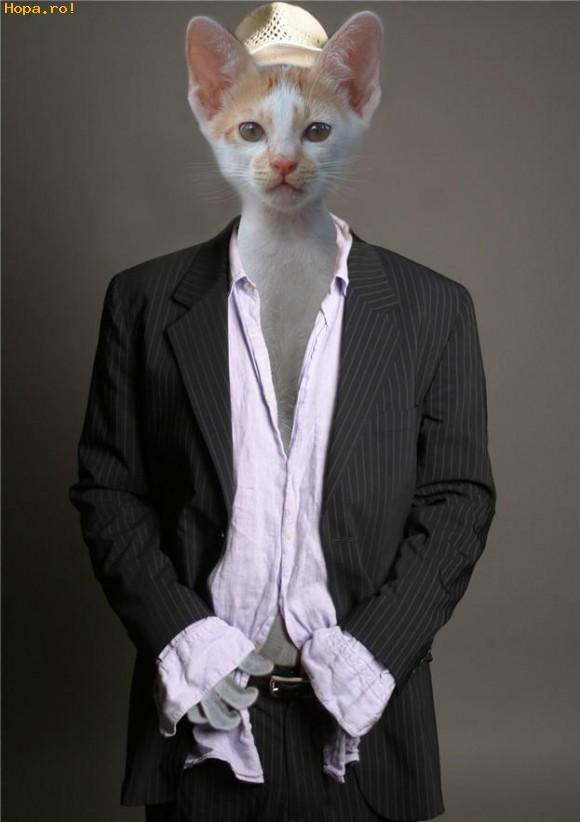 Animale - Pisica manechin