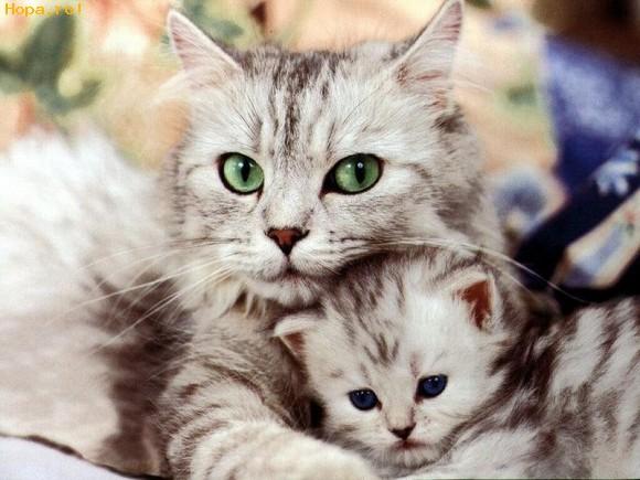 Animale - Noi avem cei mai frumosi ochi