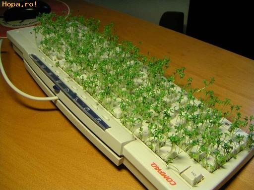 Diverse - Eco-tastatura