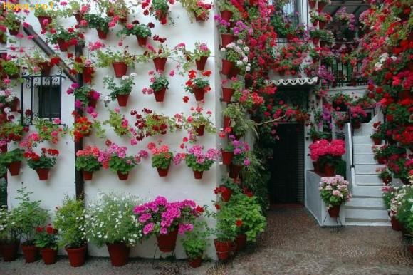 Flori - Casa cu flori