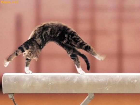 Animale - Pisicuta gimnasta