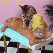Animale - relaxare...