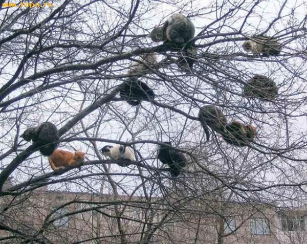 Animale - Stol de pisici