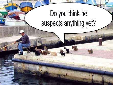 Animale - pisici la pescuit